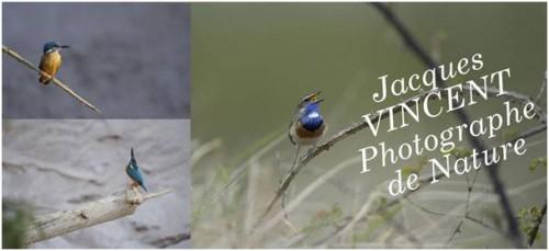 Jacques Vincent.jpg